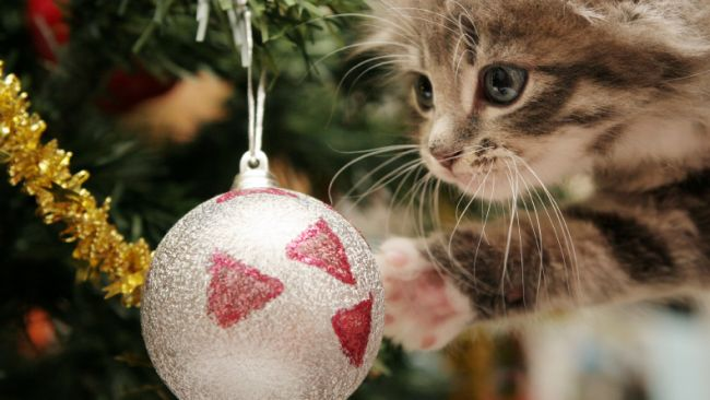 kitten_christmas_tree