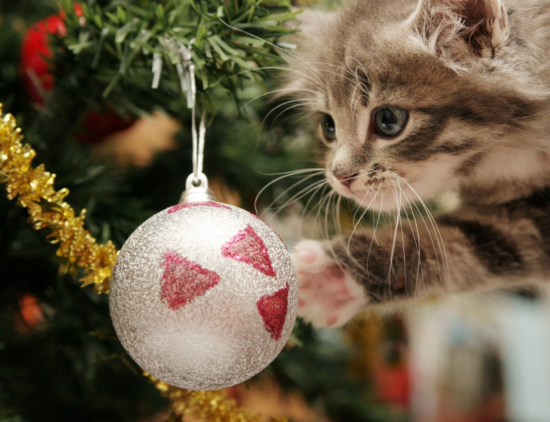 Cats Vs Christmas Trees.Cats Vs Christmas Trees You Can Not Miss These Cute Pictures
